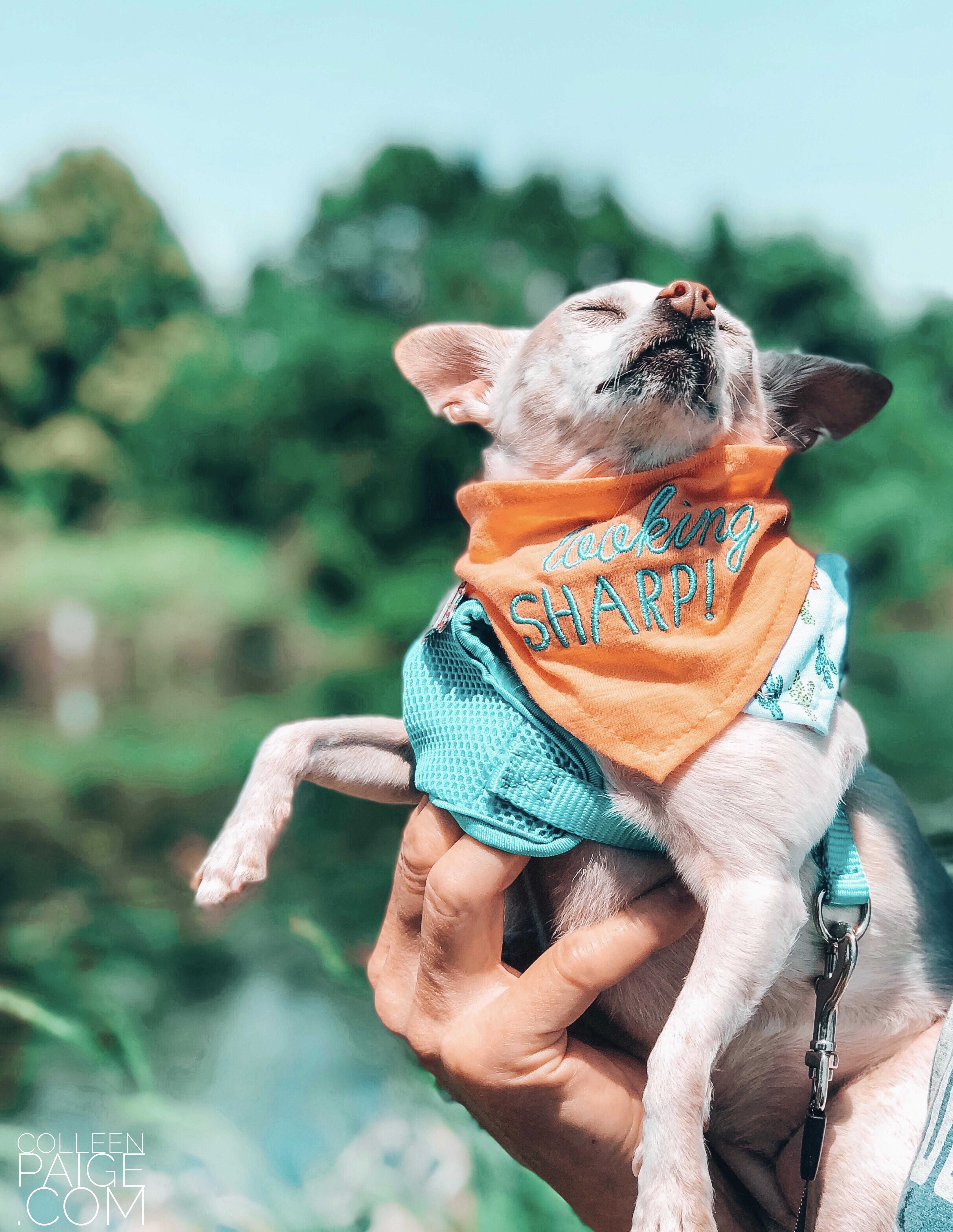 National Dog Day Celebrating Dogs