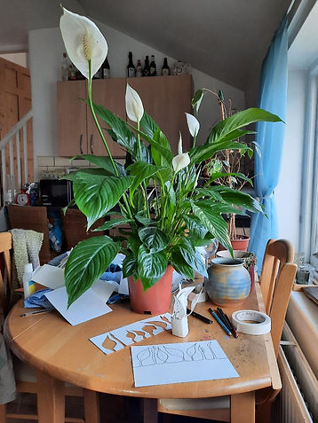 From My Home To Yours Peace Lily Katie M