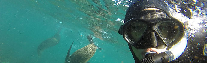Snorkel+with+seal.jpeg
