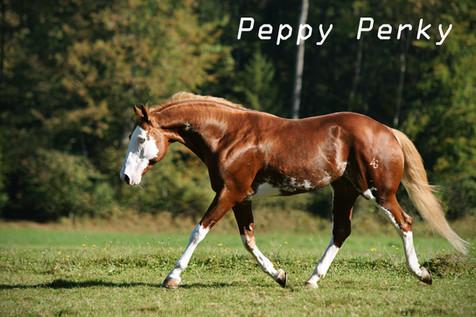 10Peppy Perky.jpg