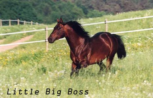 20Little Big Boss.jpg