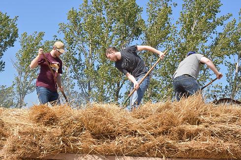 Tony,Josh,Joe on Wheat2.JPG
