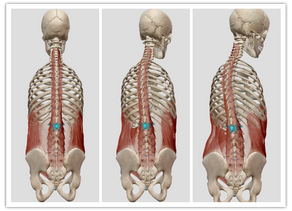 楽器を構えるときの脊椎の動き