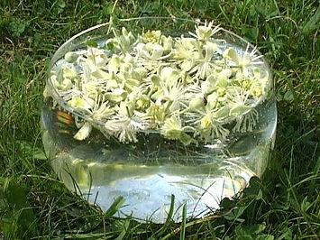 Preparação floral Clematis
