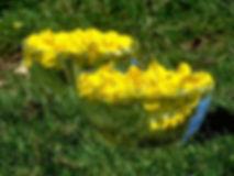 Preparação floral Gorse