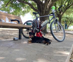 Street Outreach along the Trinity River