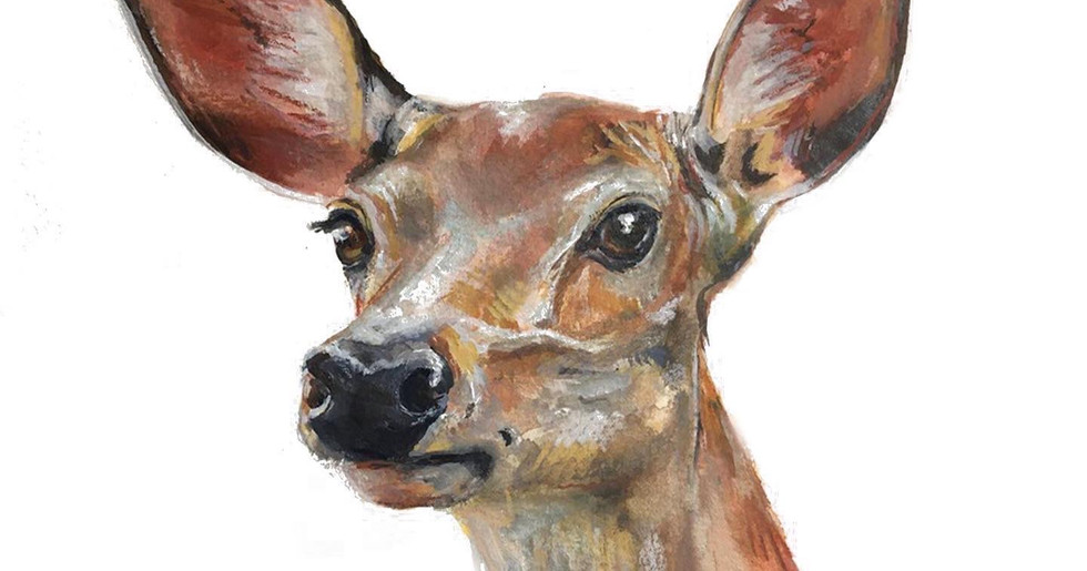 Deer, By ALICE ROBINSON-CARTER
