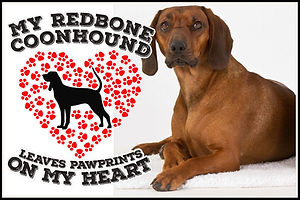 MY REDBONE COONHOUND LEAVES PAWPRINTS ON