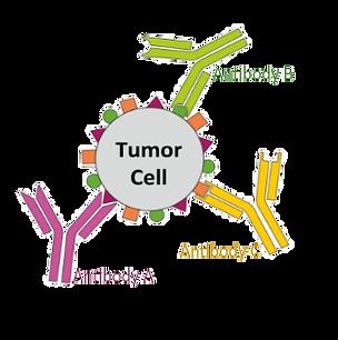 tumor-antibody.png