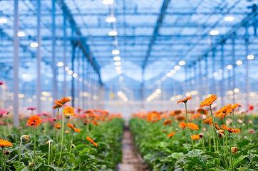 HCF Planten.jpg
