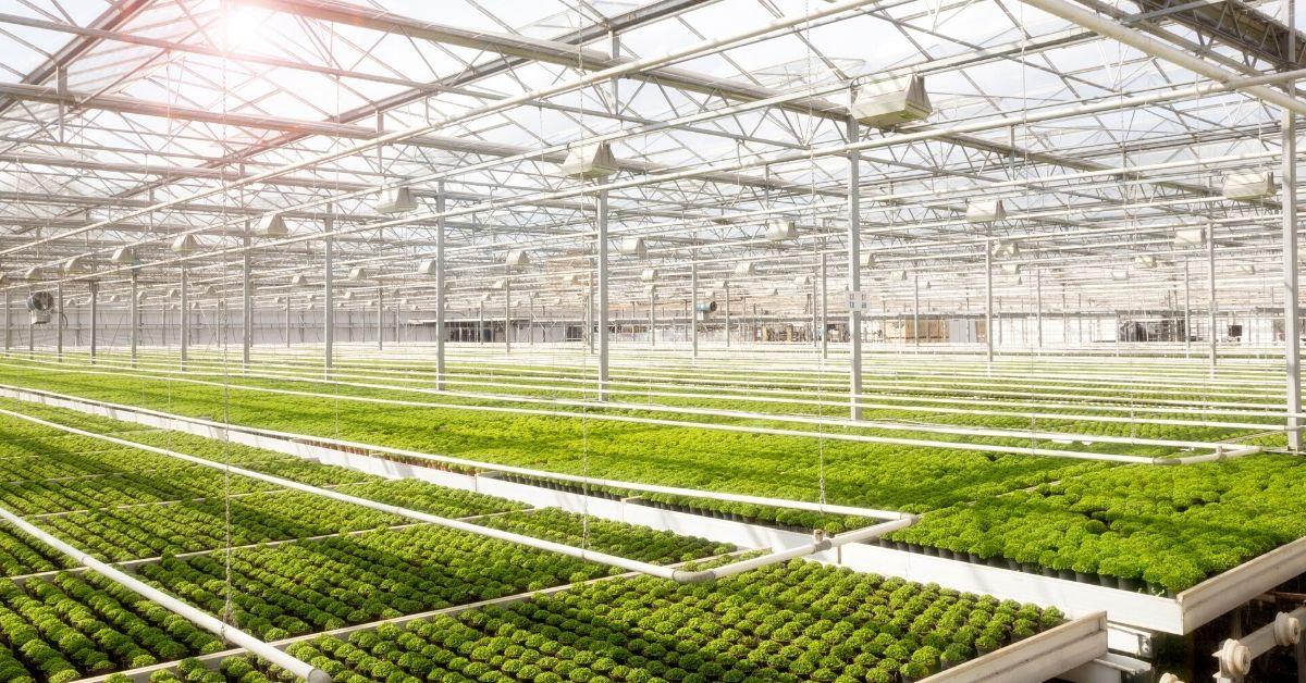 Greenhouse binnen.jpg