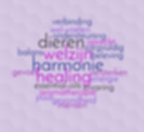 bien senti, healing en harmonie, harmonie in verbinding met je dier