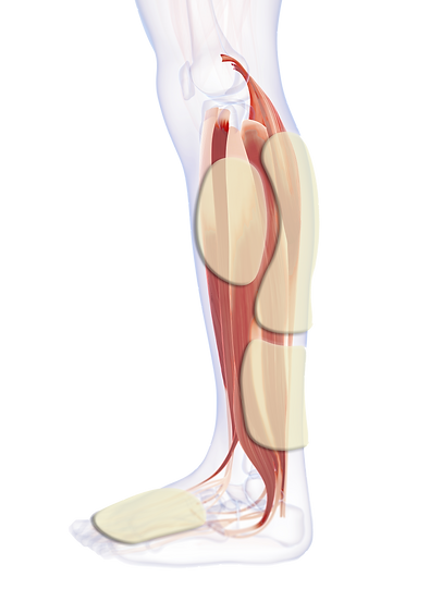 A1 - Calf, Ankle, Plantar