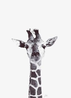 Dessin au stylo bille d'une girafe.