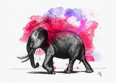 Dessin au stylo bille d'un éléphant.