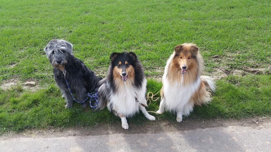 Oscar mit Tara & Finley