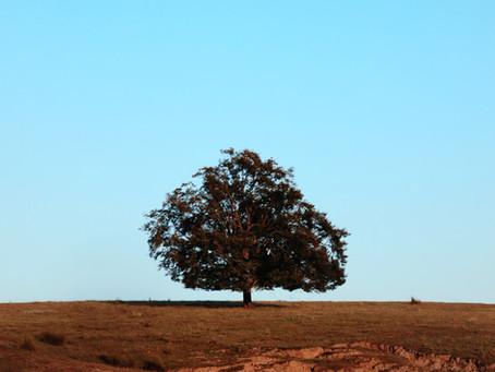 Talk: The Ten Perfections - Equanimity