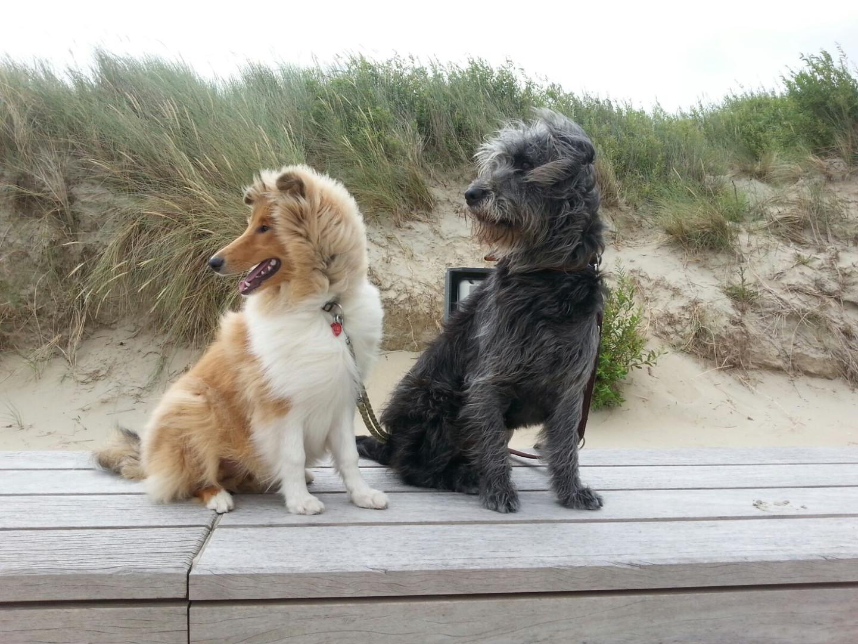Finley & Oscar