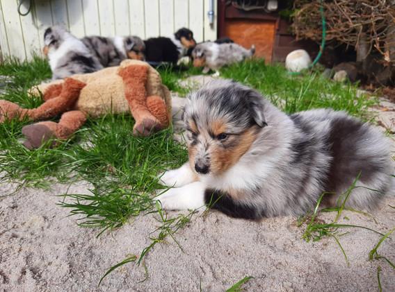 Bonnie (4 Wochen)
