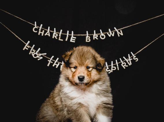 Charlie (6 Wochen)