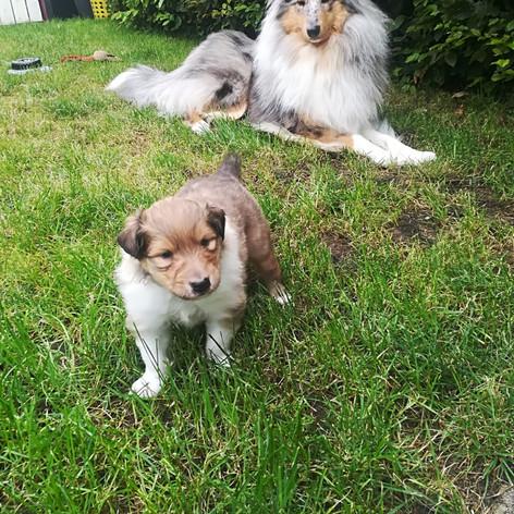 Laffey und Smilla