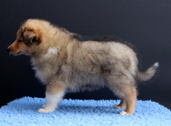 Charlie (8 Wochen alt)