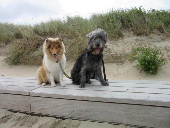 Oscar & Finley