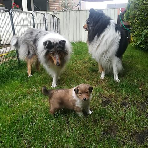 Laffey mit Tante Smilla und Mama Tara