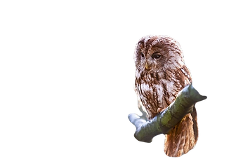 owl-1834152_960_720_edited.png