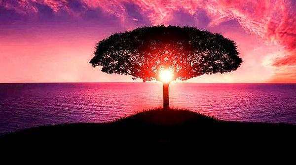tree-736885_960_720_edited_edited.jpg