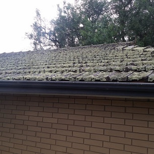 Roof covered in lichen and moss