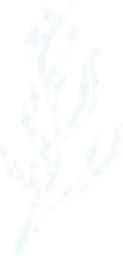 Hand-drawn root branch