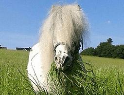 Bild Pferd Luke