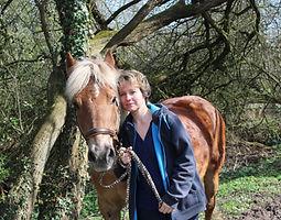 Bild Pferd Scotty