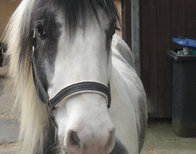 Bild Pferd Slaine
