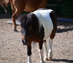 Bild Pferd Toni