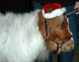 Weihnachten 2008
