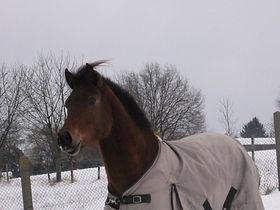 Winter 2009 20010
