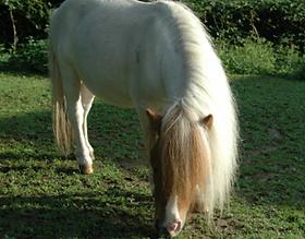 Bild Pferd Feivel