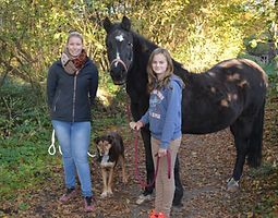 Bild Pferd Jojo
