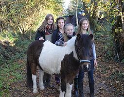 Bild Pferd Garant