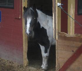 Bild Pferd Dobby