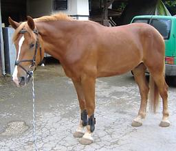 Bild Pferd Lenny