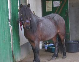 Bild Pferd Billy