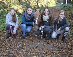 Bild Pferd Findus