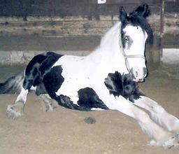 Bild Pferd Pünktchen
