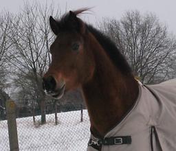 Bild Pferd Jocci