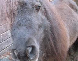 Bild Pferd Kim