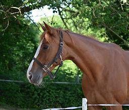 Bild Pferd Esmee