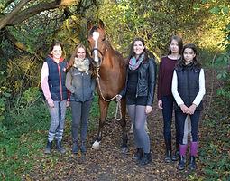 Bild Pferd Jordy